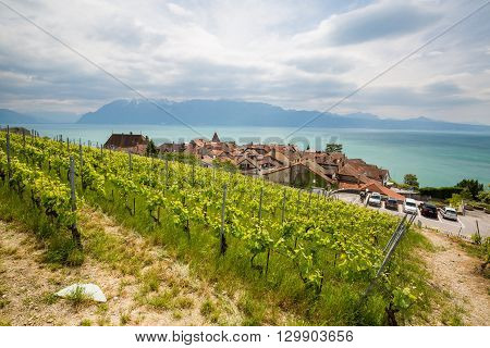View Of The Vineyards Of Lavaux On Lake Geneva