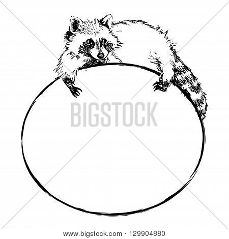Funny and touching raccoon lies on a round banner with blank space for text. Cute raccoon hand drawn engrave sketch vector illustration.