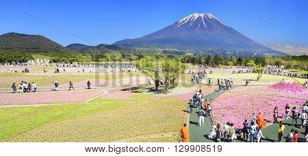 The Fuji With The Field Of Pink Moss At Shibazakura Festival, Yamanashi, Japan