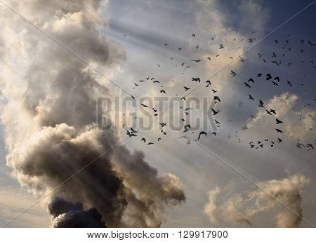 a flock of birds lined up in the SOS signal on the background of factory smoke