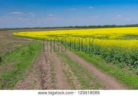 Earth road next to agricultural field with flowering rape-seed field in central Ukraine at spring season