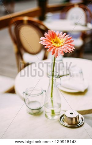 Flower Gerbera Daisy In Bottle Vase Stand At Table In Cozy Cafe Outdoor