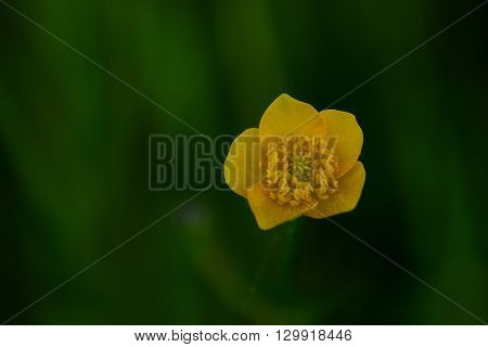 Closeup photo of a tiny yellow flower