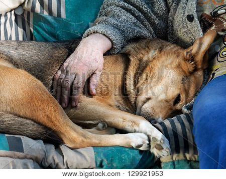 The dog and the hand of an old woman. Man hugging, stroking the dog