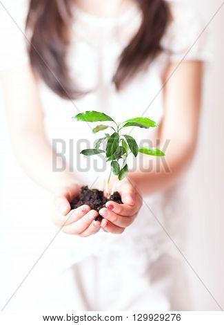Young girl is planting a young plant in dirt.