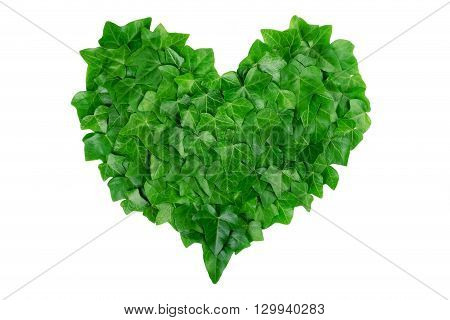 Green heart made of ivy leaves on white background. Natural organic concept.