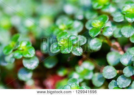 Close-up of green succulent ornamental plant over light background