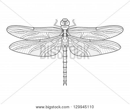 Monochrome outline of dragonfly. Isolated insect. Nature wallpaper. Stylish line dragonfly. For card invitation print t-shirt flyer logo poster label shop. Vector bug illustration.