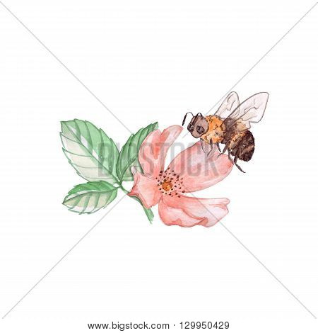 Bee on a flower. Watercolor illustration. isolated on white