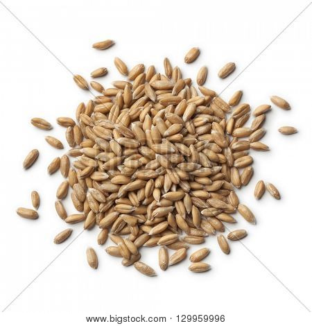 Heap of raw Spelt wheat  on white background