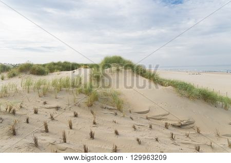 sand dunes at the north sea beach in the netherlands