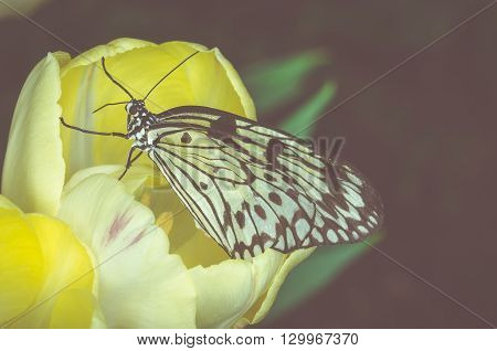 Vintage style image of a yellow butterfly