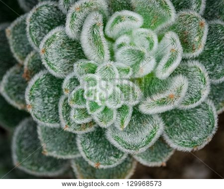 Close up image of a cactus plant