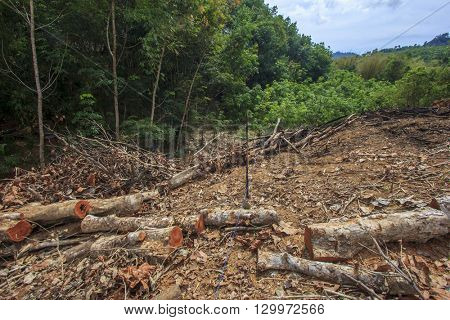 Deforestation environmental problem, rain forest destroyed for oil palm plantations