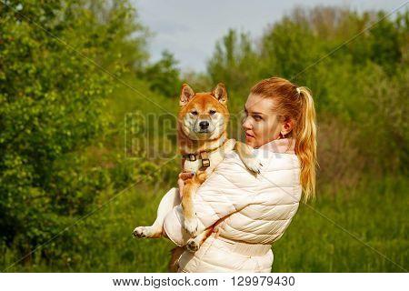 Girl holds a dog Shiba Inu. Walking with a pet. Pedigree dog.