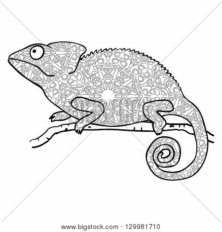 Zentangle style chameleon. Stylized vector animal isolated on white. Coloring page for adults. Abstract black and white freehand pattern in tribal style
