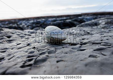 Perfect sea shell on a flat rock at ocean tide pools.