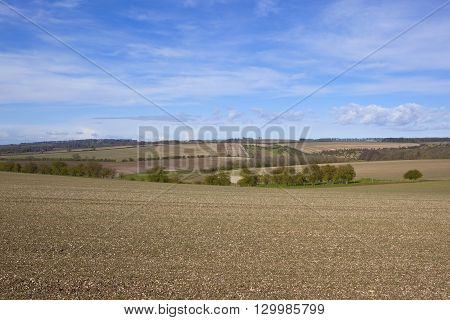 chalky plowed fields with trees and hedgerows in the rolling hills of the yorkshire wolds in springtime under a blue cloudy sky