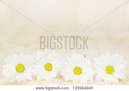 Spring white flowers on a wooden background. Copy space. Background. Pattern. Texture.