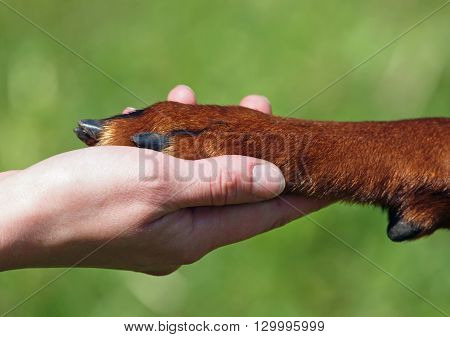 Hand and paw of dog on natural background