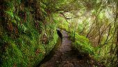 trekking footpath in levada Caldeirao Verde Madeira Portugal poster
