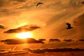 Seagulls far from home soar as the sunsets over a Nashville Lake**Note slight graininess,  poster