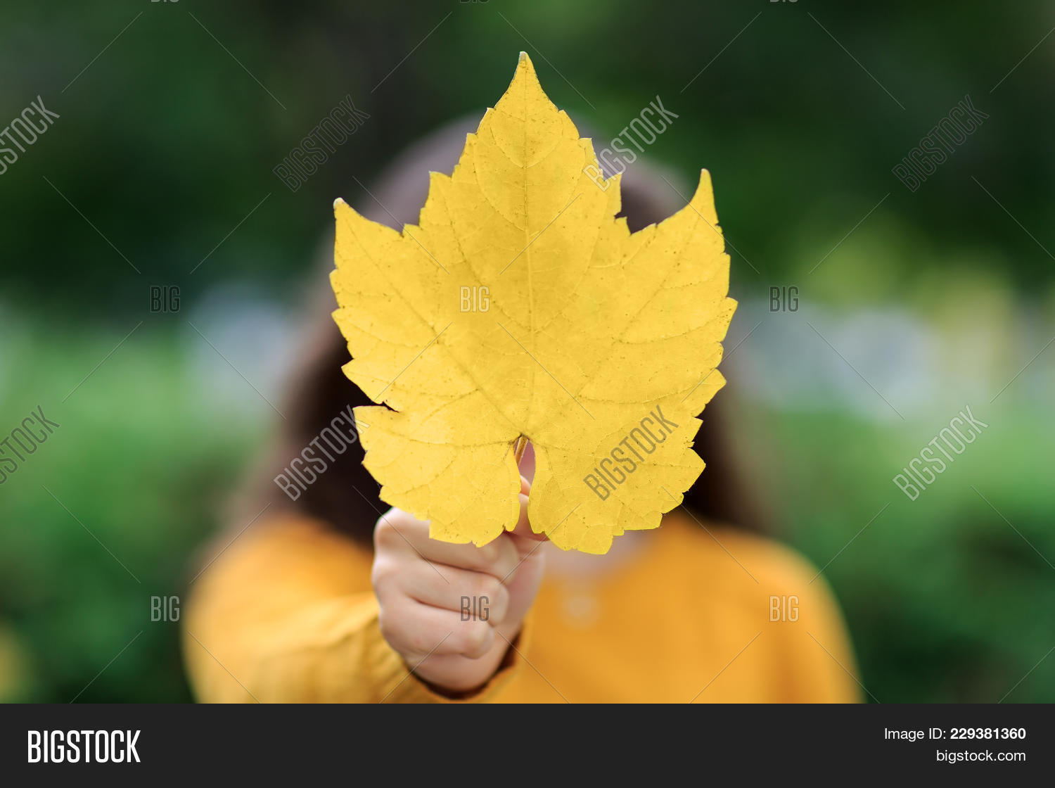 Happy Girl Maple Leaf Image Photo Free Trial Bigstock