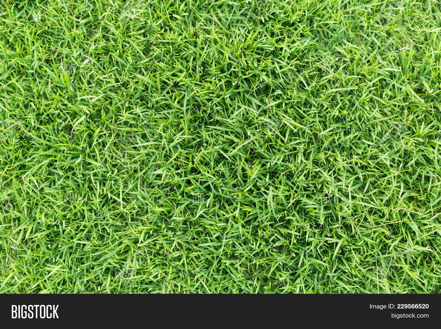 green grass soccer field. Grass Texture Or Background. Green For Golf Course, Soccer Field  Sports Green Grass Soccer Field