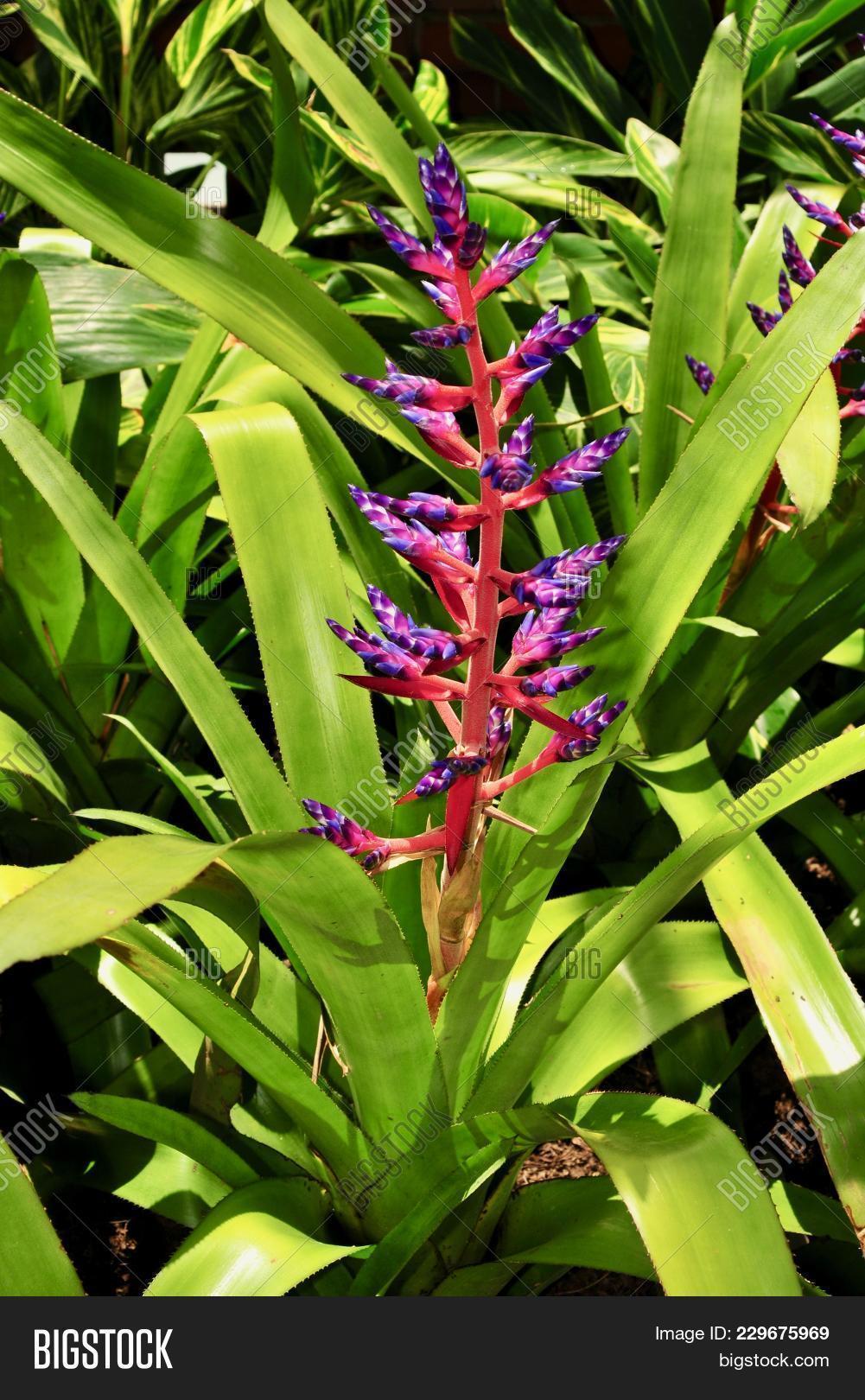 Purple Red Flower Image & Photo (Free Trial) | Bigstock on purple leaf plants with leaf, purple leaf shrub with pink flowers, hydrangea with purple leaves,