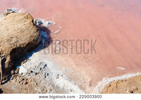 Water Surface Of Pink Extremely Salty Syvash Lake, Colored By Microalgae. Also Known As The Putrid S