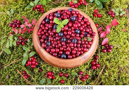 Cowberry And Blueberry In A Round Wooden Bowl On A Moss Background
