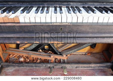 Old, Broken And Abandoned Piano - Claviature