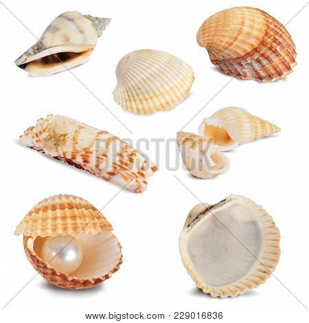Collection Of Beautiful Natural Seashells Isolated On White