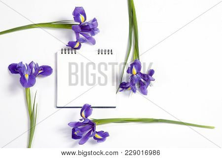 Violet Irises Xiphium - Bulbous Iris, Sibirica - On White Background With Space For Text. Top View,