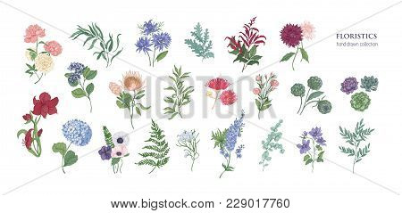 Collection Of Popular Floristic Flowers And Decorative Plants Isolated On White Background. Set Of B
