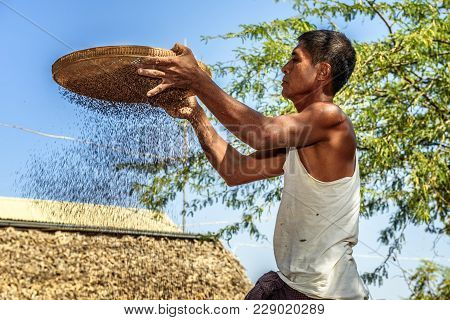 Bagan, Myanmar - January 24, 2016 :  Burmese Farmer Sifts Grains During Harvesting Time To Remove Ch