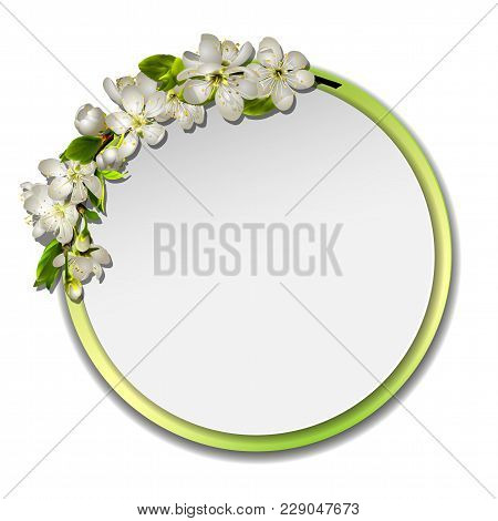 Spring Vector Card Or Banner With Cherry Blossom. White Flowers Wreath, Round Frame With Green Borde