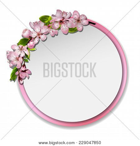 Spring Vector Card Or Banner With Japanese Cherry Blossom. Pink Sakura Flowers Wreath, Round Frame W