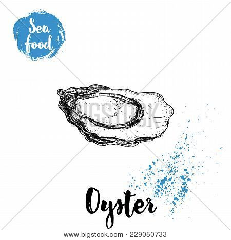 Hand Drawn Opened Oyster. Seafood Sketch Style Illustration. Fresh Marine Mollusk In Shell.