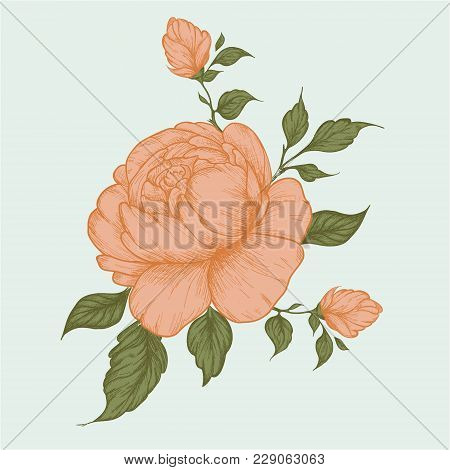 Set Of Peony Flowers, Bud, Leaves, Hand Drawn Sketch Style Vector Illustration On White Background.