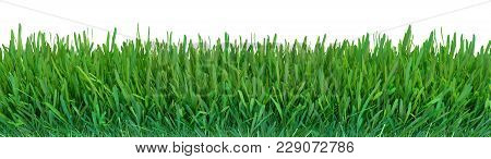 Green Grass. Natural Grass Texture Background. Meadow. Spring, Summer Season. Plant Growth 3d Render