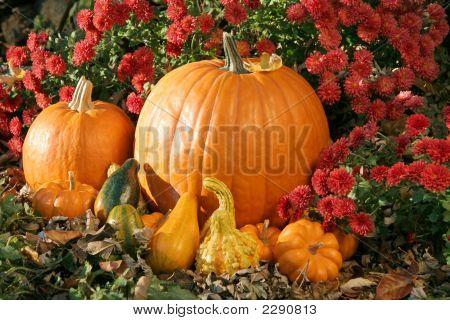 Pumpkin And Gourds