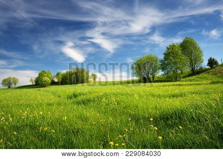 Green Field With Yellow Dandelions And Blue Sky. View To Grass And Flowers On The Hill On Sunny Spri