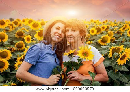 Middle-aged Mother And Her Daughter Hugging In Sunflower Field At Sunset And Gather Flowers
