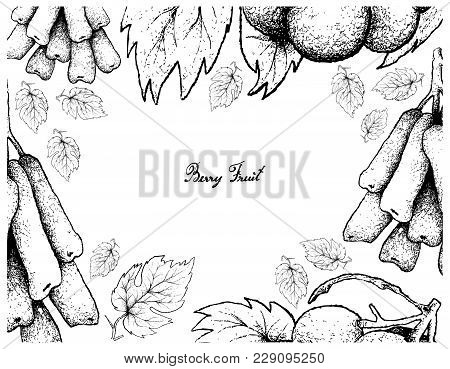 Berry Fruits, Illustration Frame Of Hand Drawn Sketch Bunch Of Fresh Longated Black Grapes Or Moon D