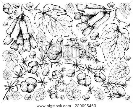 Berry Fruit, Illustration Wall-paper Background Hand Drawn Sketch Of Fresh Asparagus Fern Fruits And