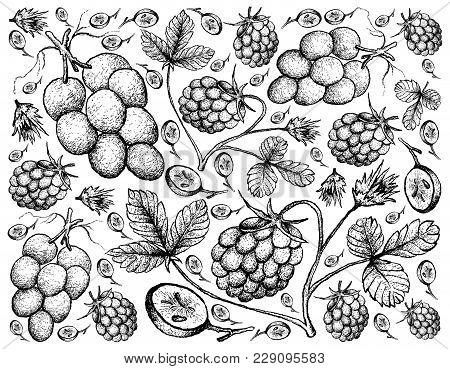 Berry Fruit, Illustration Hand Drawn Sketch Of Fresh Arctic Bramble, Arctic Raspberry Or Rubus Arcti