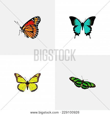 Set Of Moth Realistic Symbols With Yello-wing, Birdwing, Hairstreak And Other Icons For Your Web Mob