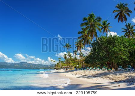 Perfect Empty Caribbean Tropical Sandy Beach With Clear Water And Green Palm Trees