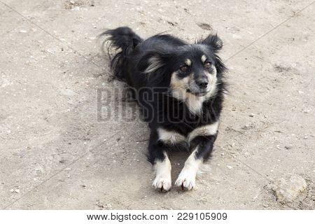 Mongrel Sad Dog. Close-up On A Gray Soil.